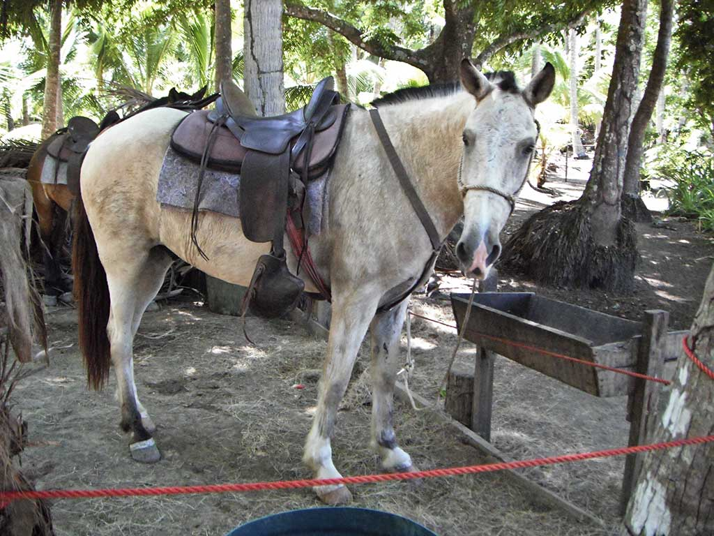 Horse at stable on Isla Tortuga